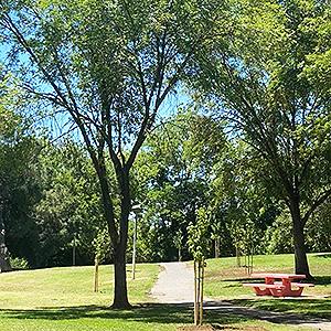 Adison's Grove at Rahilly Park