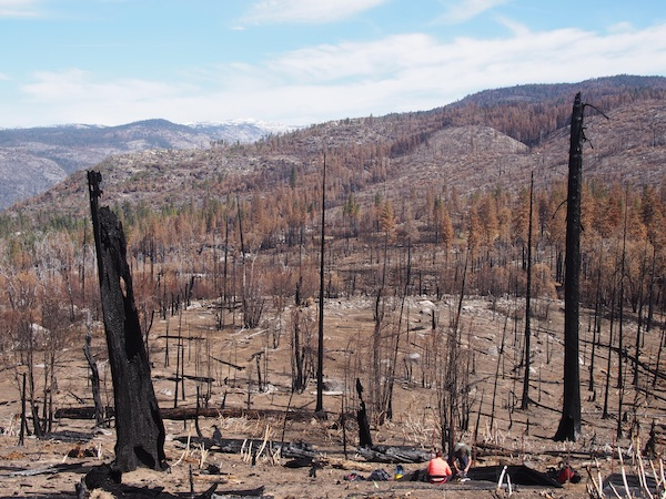 A landscape of burned, charred trees with researchers in the foreground collecting sediment samples. Photo courtesy of  Emma McCorkle.