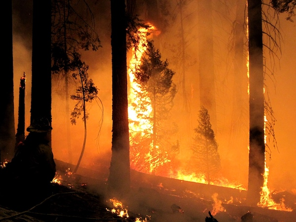 Fire raging in forest at night.