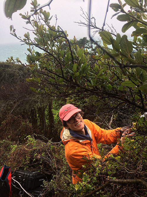 Professor Elliott Campbell is heading a new project looking at the links between climate change, redwoods, fog and people's sustainable behaviors.