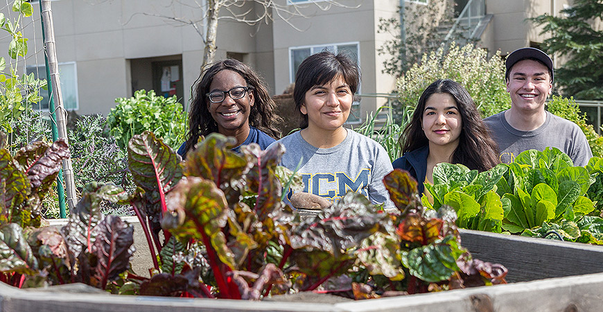 Students tend the UC Merced Campus Community Garden.