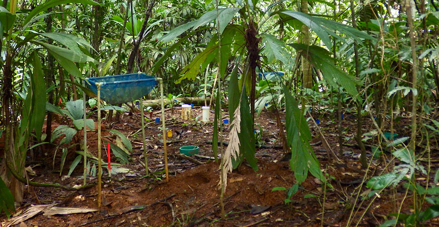 Equipment in the Costa Rican rainforest measures the soil emissions.
